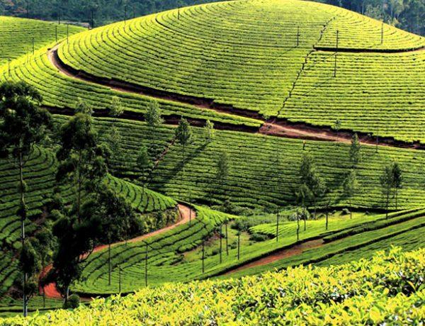 Munnar, Kerala-honeymoon places near Coimbatore